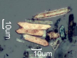 Pyrolyzed Phytolith